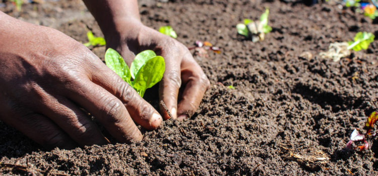 R40 million investment to boost urban agriculture, food processing jobs in Philippi