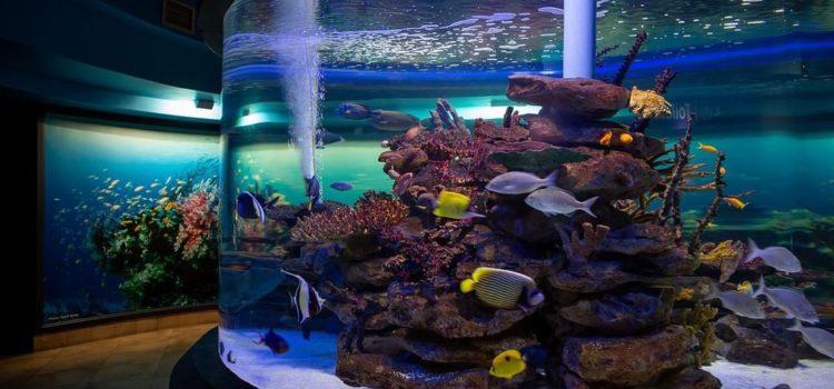 Two Oceans Aquarium Marine Science Academy