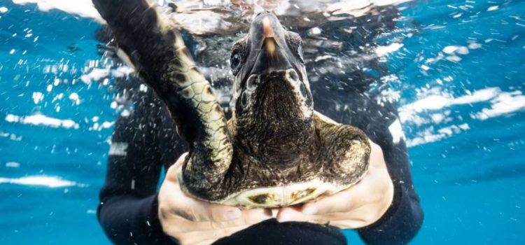 Not every turtle makes it: What did Marcel the green turtle try to teach us about the dangers facing the ocean?