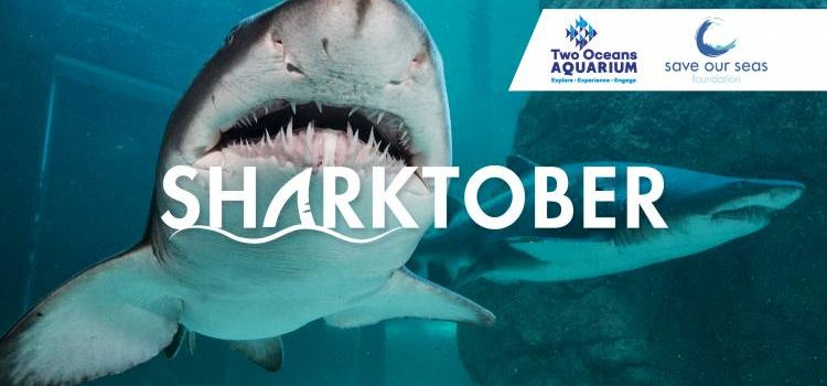 Sharktober is still going strong